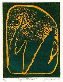 agave skyward 4x5.JPG