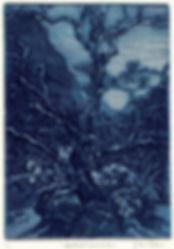 Sabino Sycamore 5.5x7