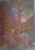 Sabino  canyon Sycamore colored 5.5x7.5.