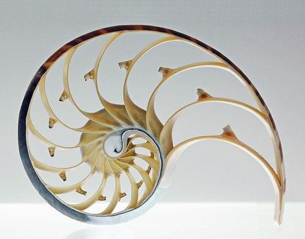 shell1.jpg