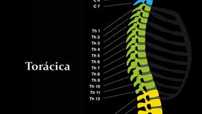 Patologias da Coluna Cervical