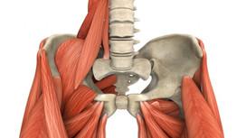Saiba mais sobre o músculo psoas