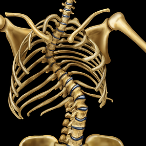 Spine, scoliosis (1).png