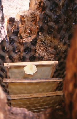 BEE' S VILLAGE  Μ.Σπηλιόπουλος