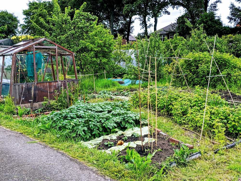 allotment Manchester Lupo