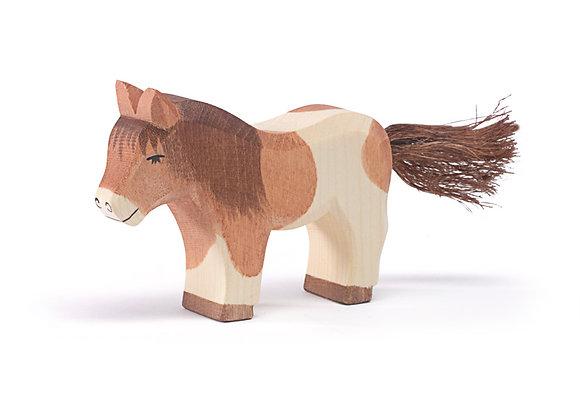 Shetland Pony Standing