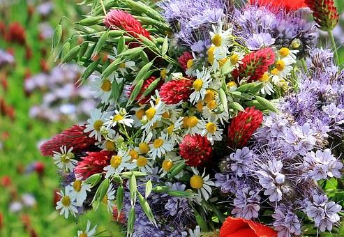 wild-flowers-1423270__340