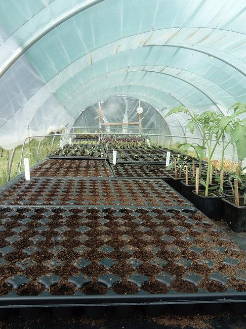 atelier multiplication des végétaux novembre 2021