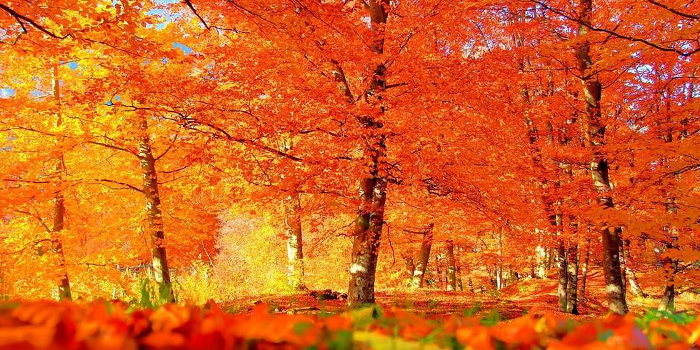 Mille sfumature d'autunno