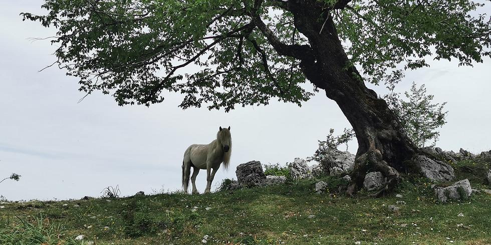 Monte Lupone con le poesie di Franco Arminio