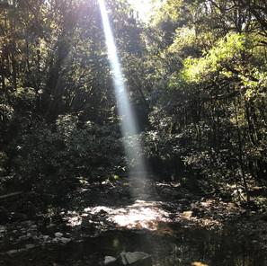 茶 棲む森
