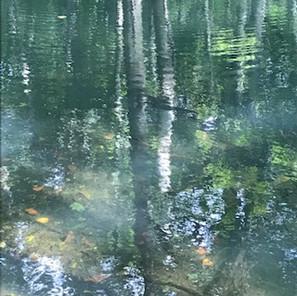 森の沼から