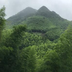 武夷山-◻︎◻︎关-廈門