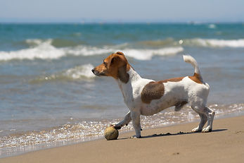 JRT on beach.jpg