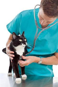 IS Vet and cat.jpg