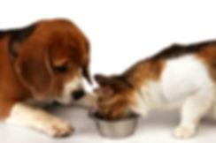 dog&cat%20eating_preview.jpeg.jpg