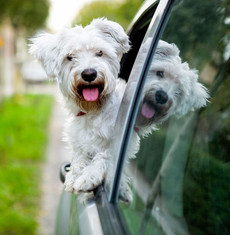 Travelling your dog