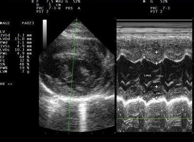 Ultrasound of a cross section through a dog's heart