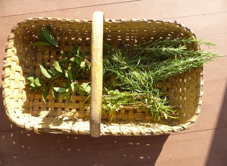 Harvest Time in the Herb Garden