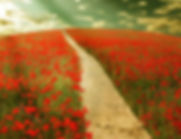 chemin printemps.jpg
