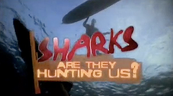 Sharks are they hunting us