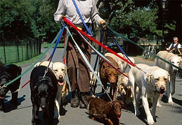 Dog Walker1.jpg