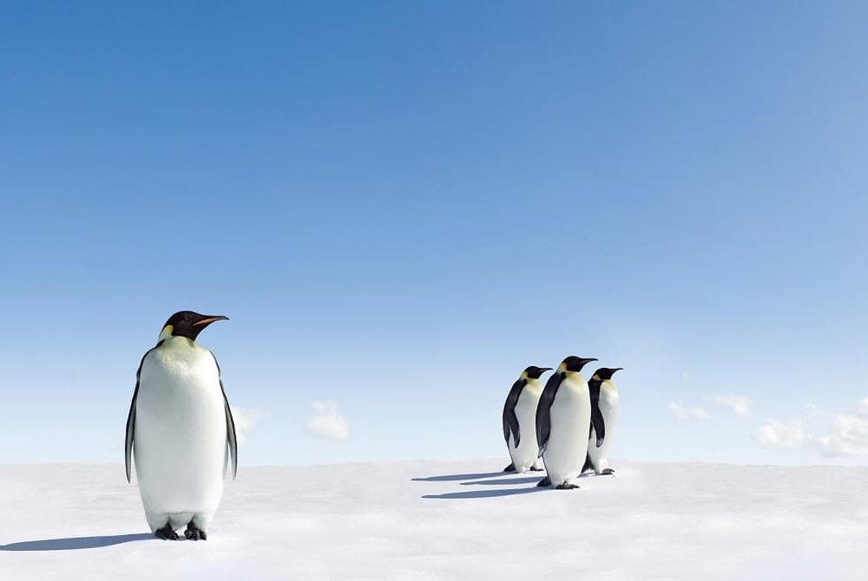 pinguin2.jpg