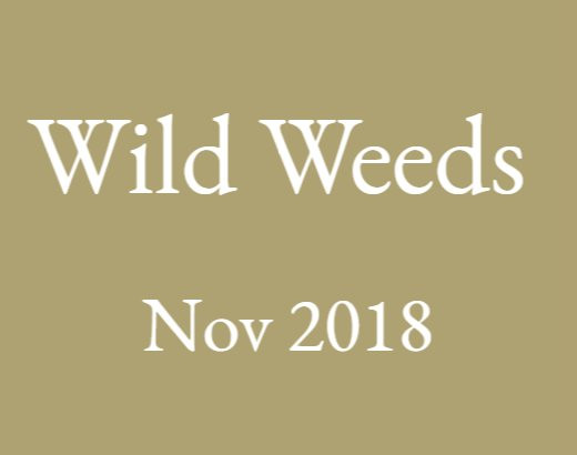 Wild Weeds Workshop and Wander November 2018