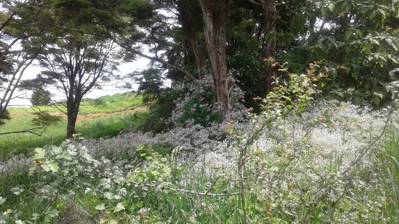 Wild weeds meadow