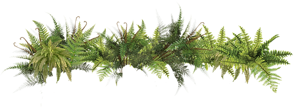 ferns-png-26184.png