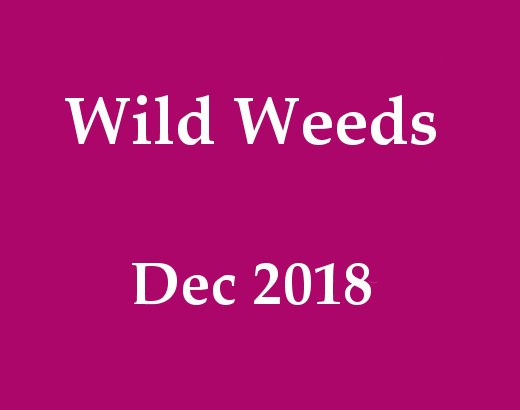 Wild Weeds Wander and Workshop. Held December 2018