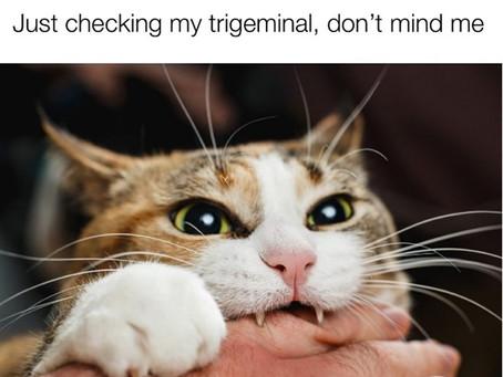 CATaloging the Cranial Nerves: The Trigeminal-5