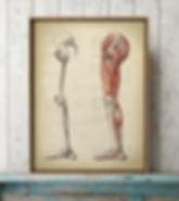 anatomical_drawing.jpg