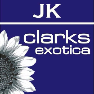 JK Clarks Dalhousie.jpeg