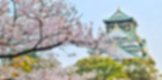 beautiful-blooming-blossom-1440476.jpg