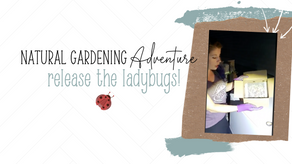 All Natural Gardening: Release the Ladybugs!