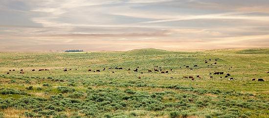 Tjdaen Ranch Raised Beef Nebraska