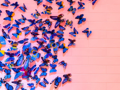 Bob sends Alice Butterflies