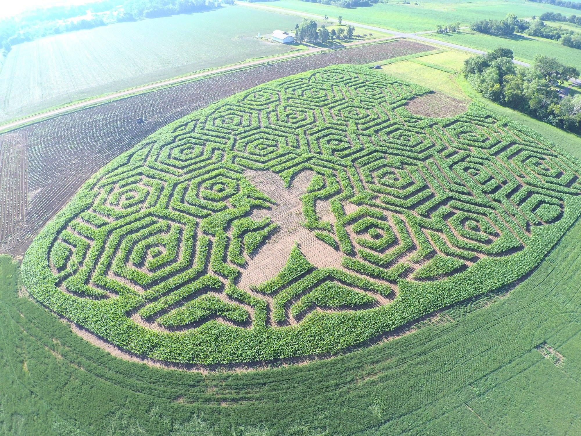 Beehive corn maze