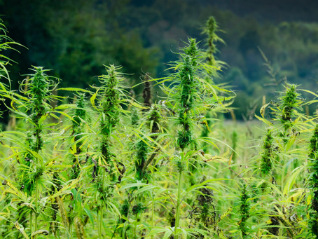 Understanding CBD: What is it? Safety, Benefits, and How to Use it