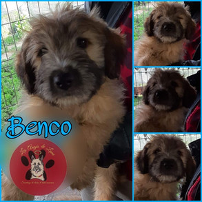 Benco
