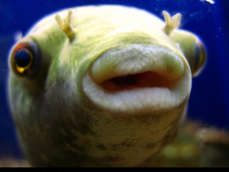I'm still bewildered by people who inject stuff into their lips in order to look like a trout...