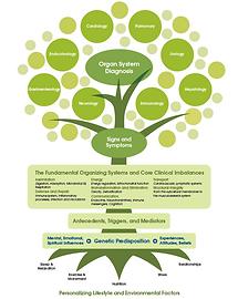 Functional Medicine Tree IFM