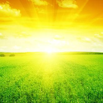 sunset on field.jpg
