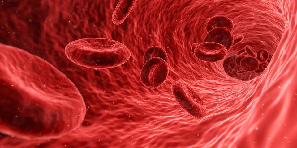 Sistema circulatoria