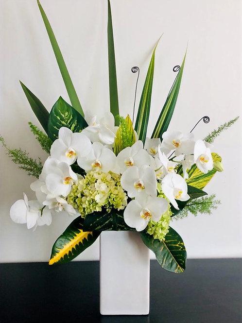 Blancas Orquídeas