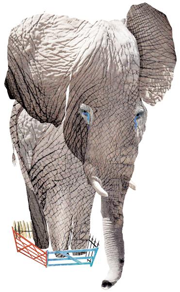 Elephants in zoos