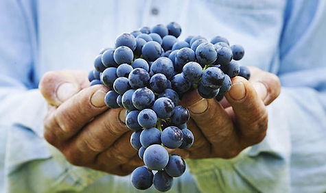 07_14-Great-Grapes-for-the-Garden.jpg