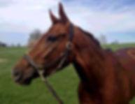 Lexington_Horse_June_2016.jpg