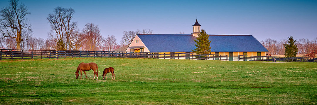 bigstock-Thoroughbred-Horse-Grazing-At--413892791.jpg